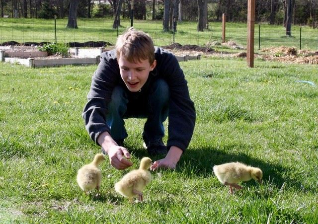 boy with chicks